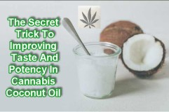 Coconut Oil Benefits (Including Marijuana Medicated Capsules
