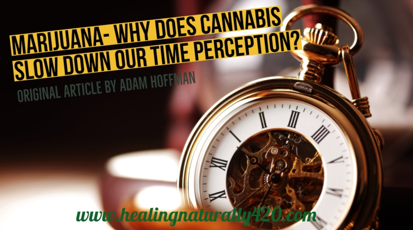 Why Does Cannabis Slow Down Our TimePerception?